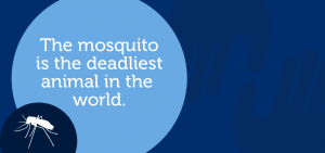 Mosquito ia the deadline animal in the world